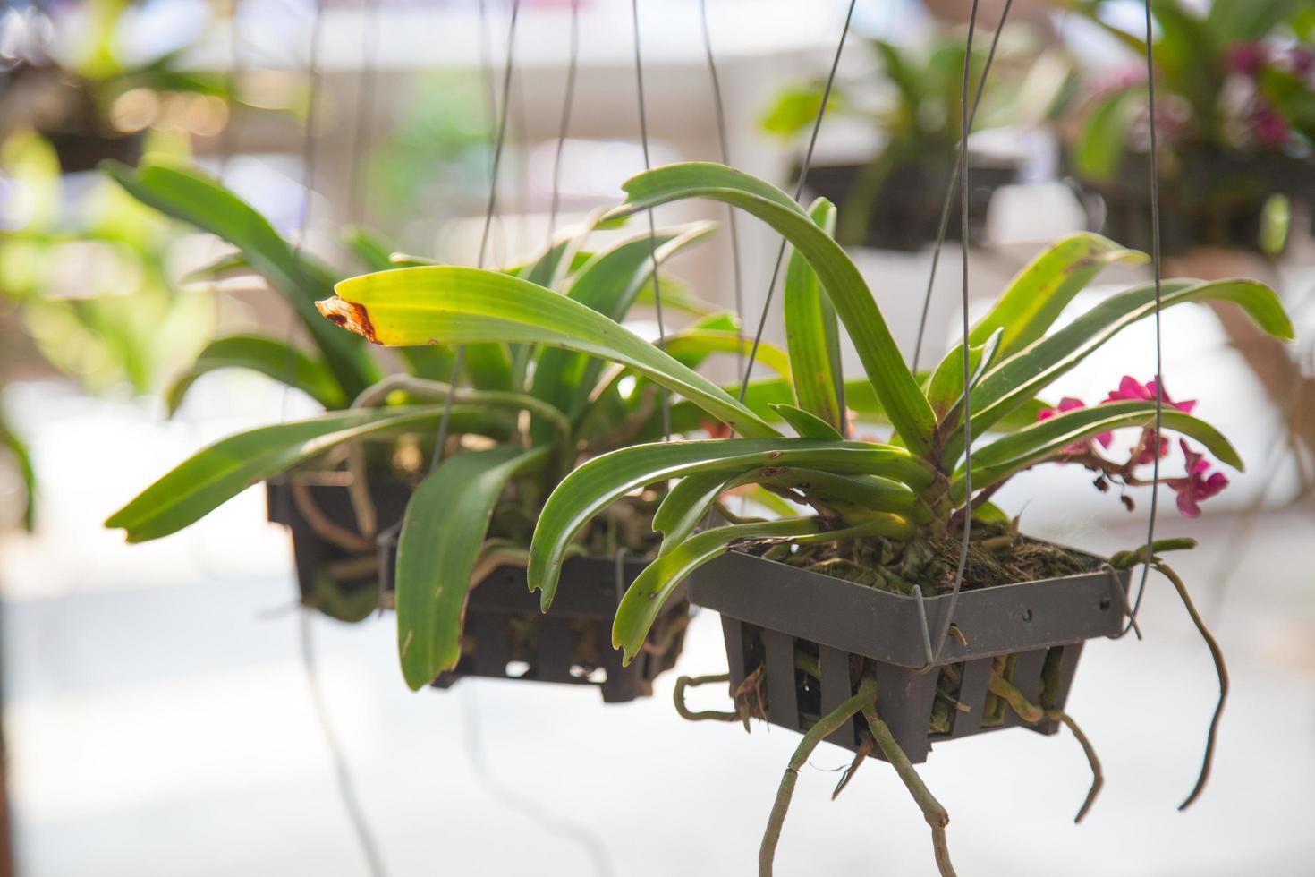 Töpfe und Orchideen foto