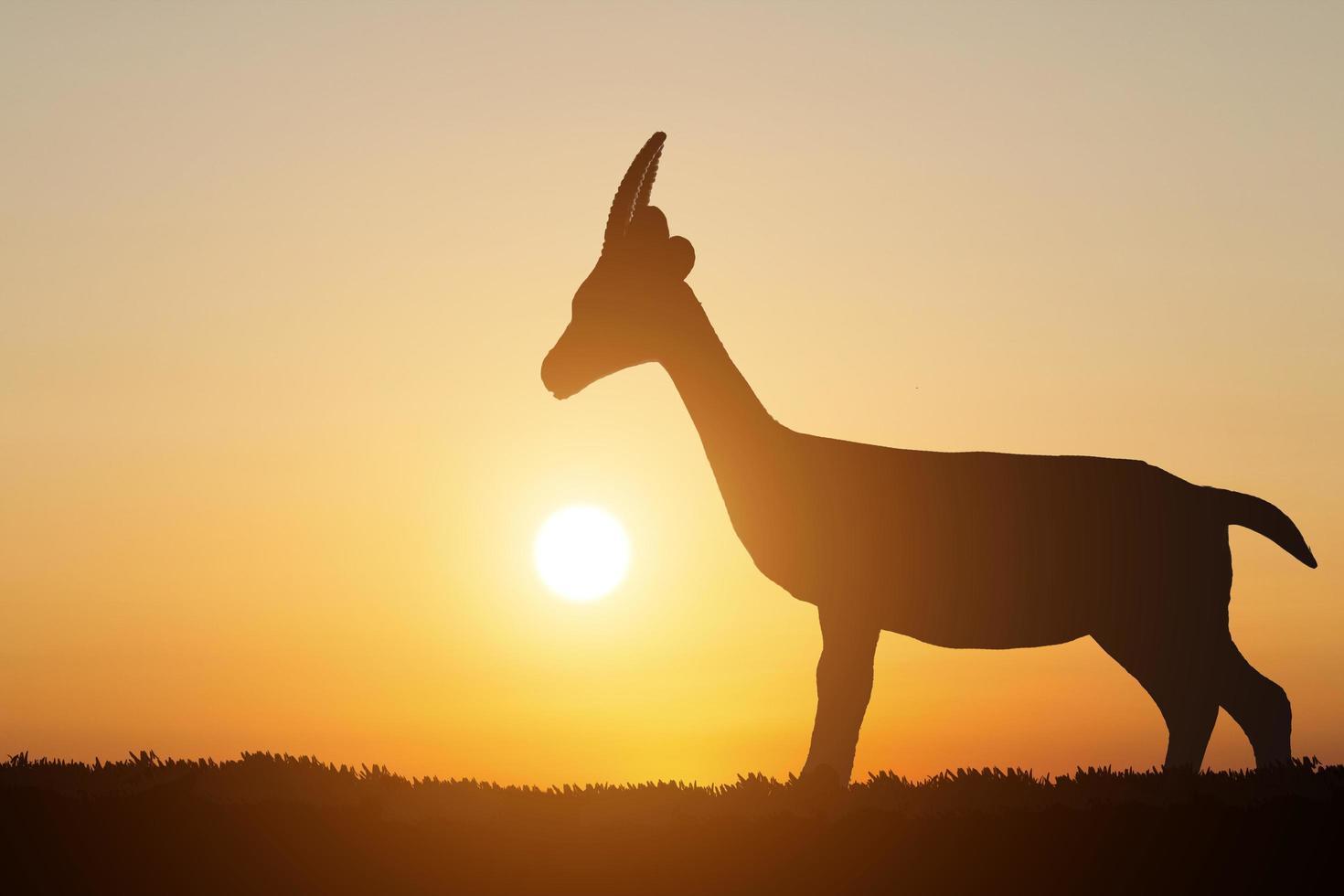 Silhouette eines Hirsches auf Sonnenunterganghintergrund foto