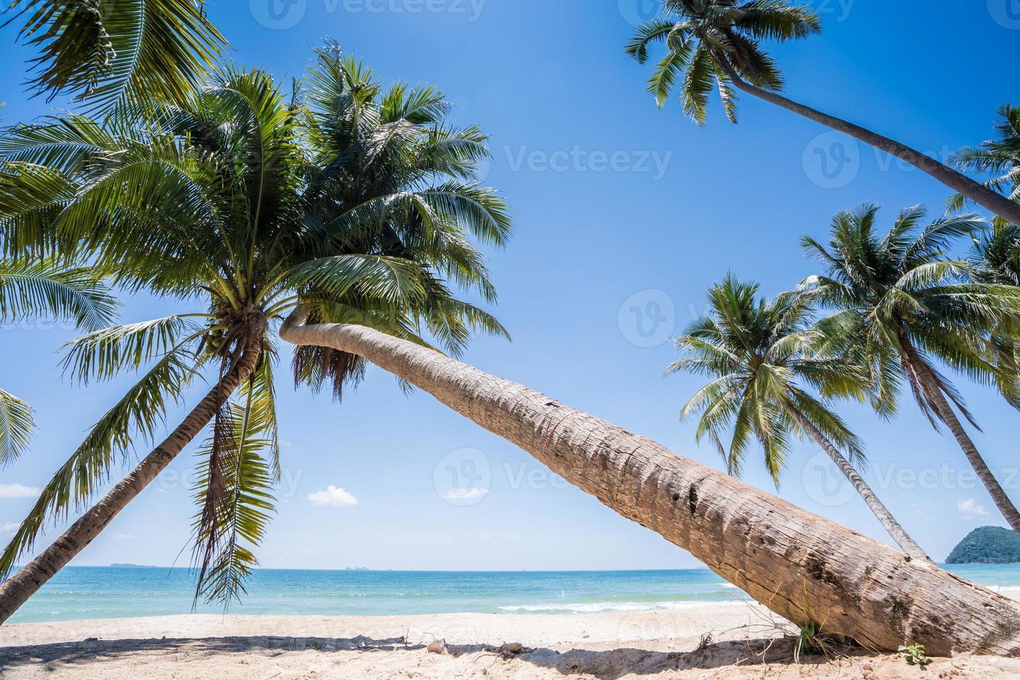 Palmen an einem weißen Strand foto