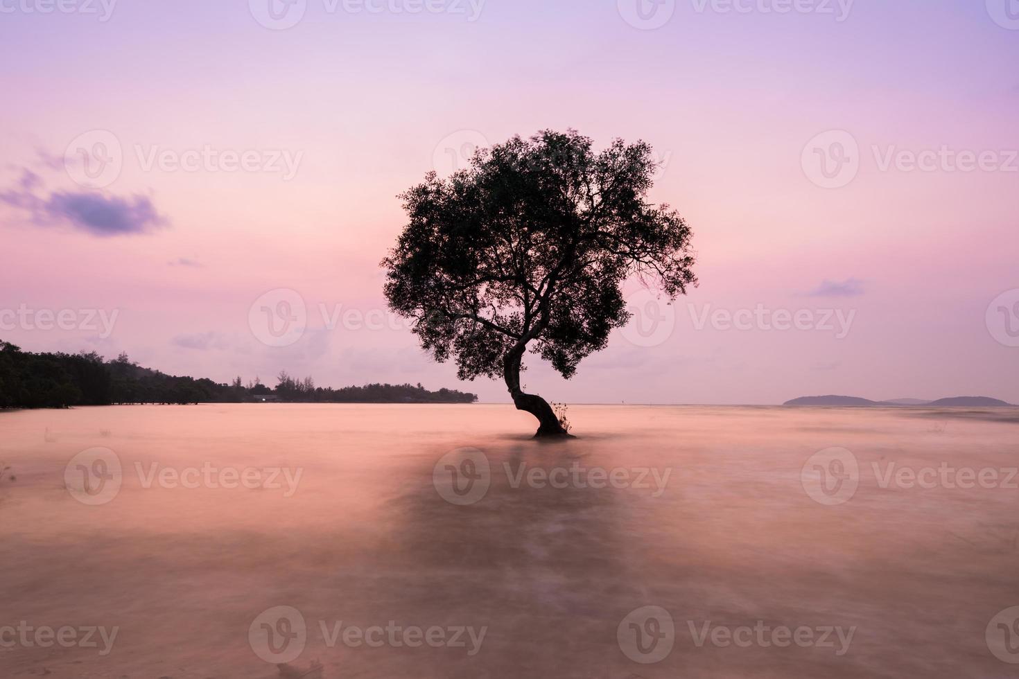 Baum im Wasser foto