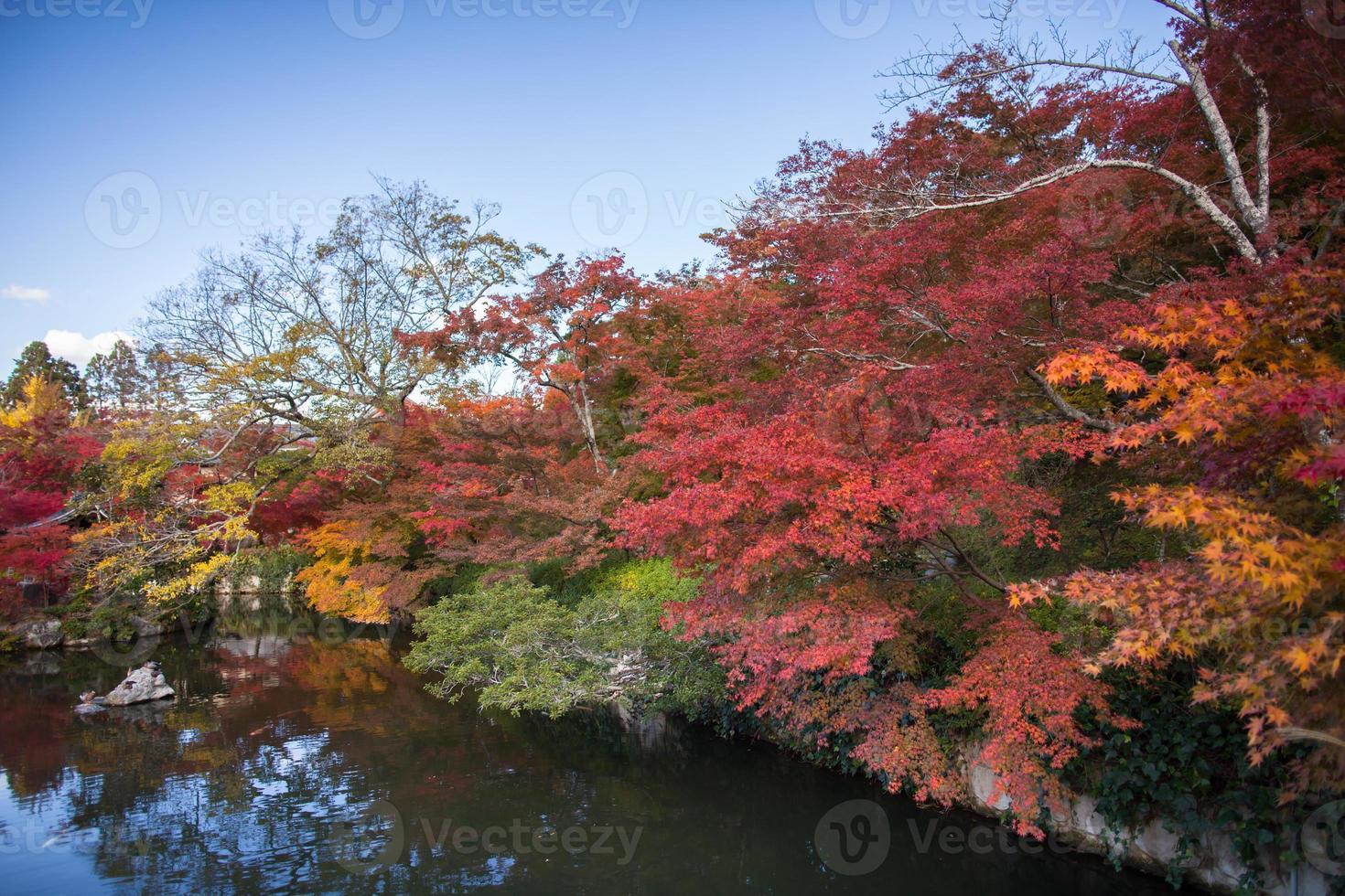 Herbstbäume in der Nähe von Wasser foto