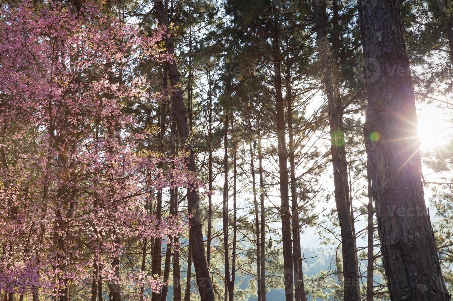 Sonnenschein auf Bäumen foto