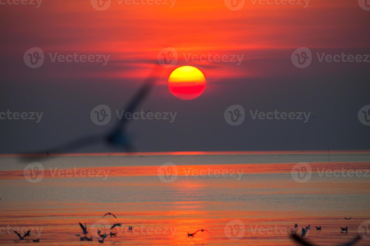 Möwe gegen einen Sonnenuntergang foto