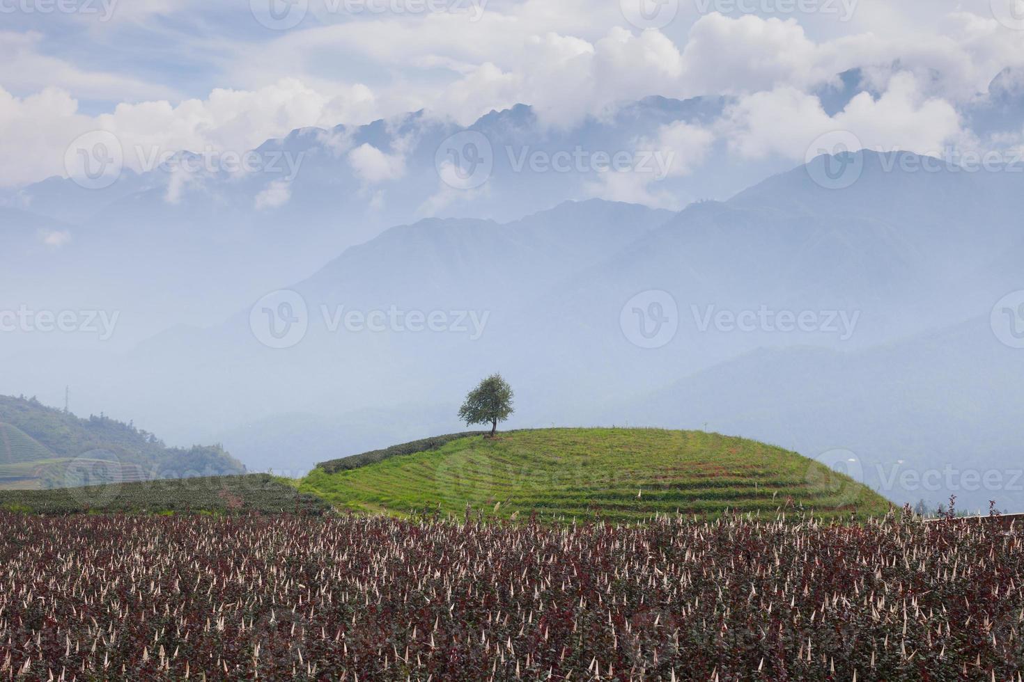 Baum auf einem grünen Hügel foto