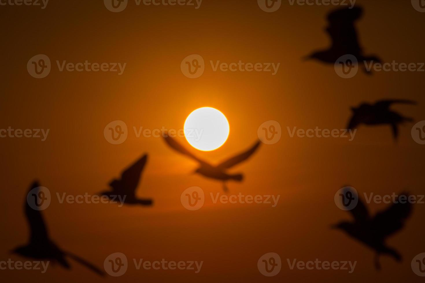 Silhouette der Möwen bei Sonnenuntergang foto
