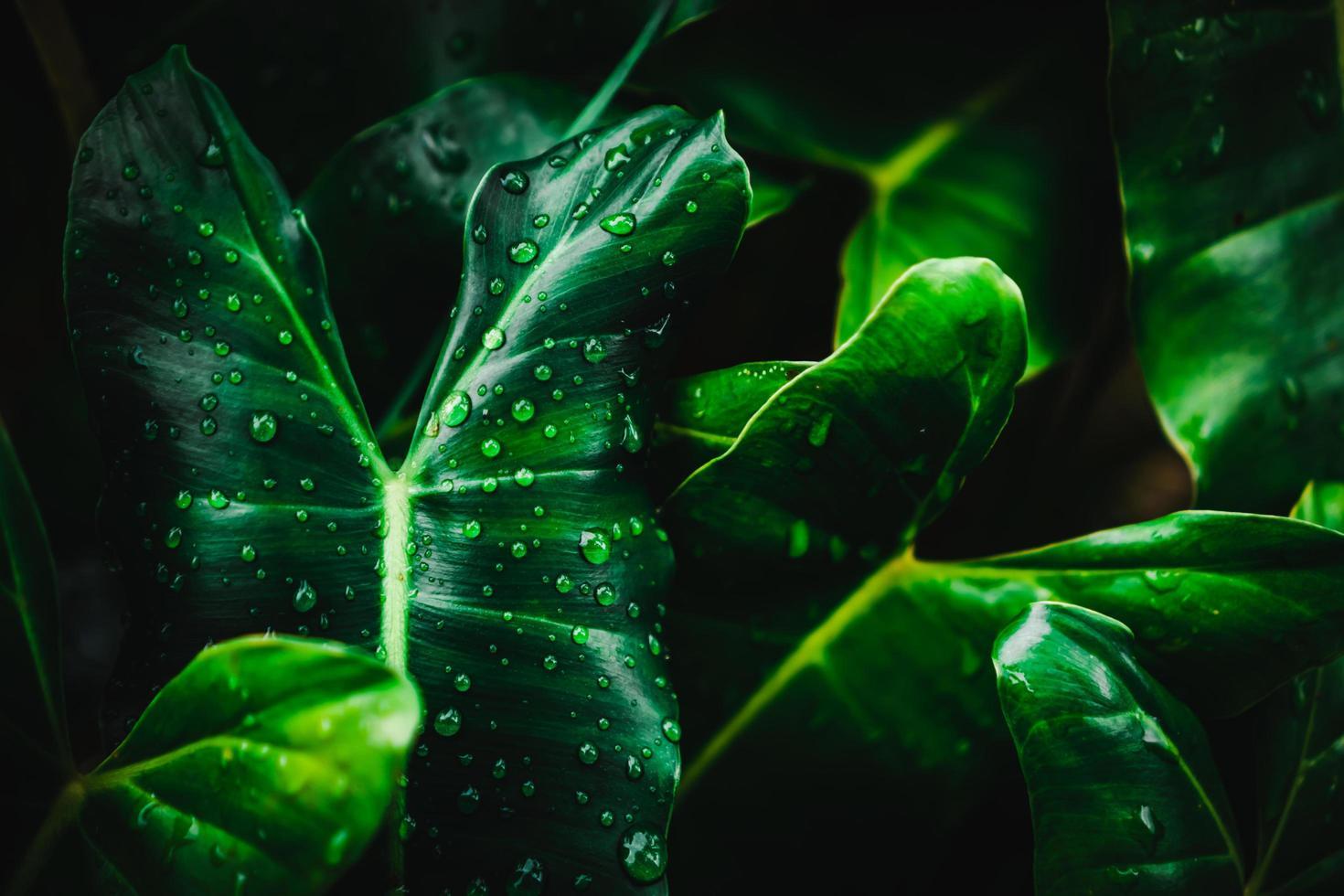 verschwommener grüner Blatthintergrund der Nahaufnahme foto