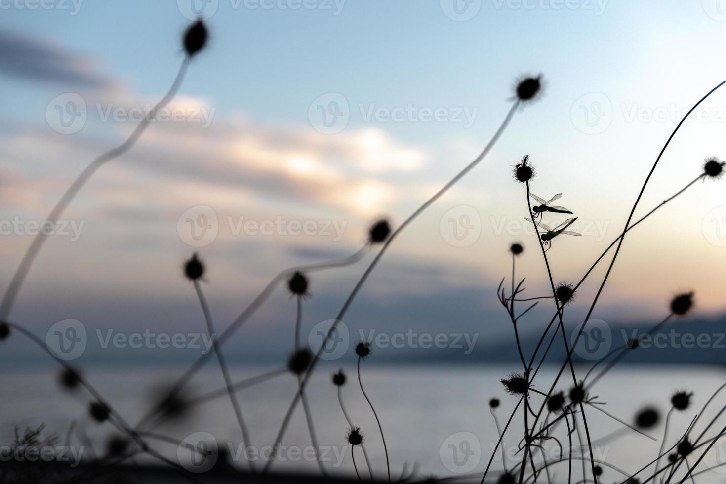 Libelle auf einem Zweig foto