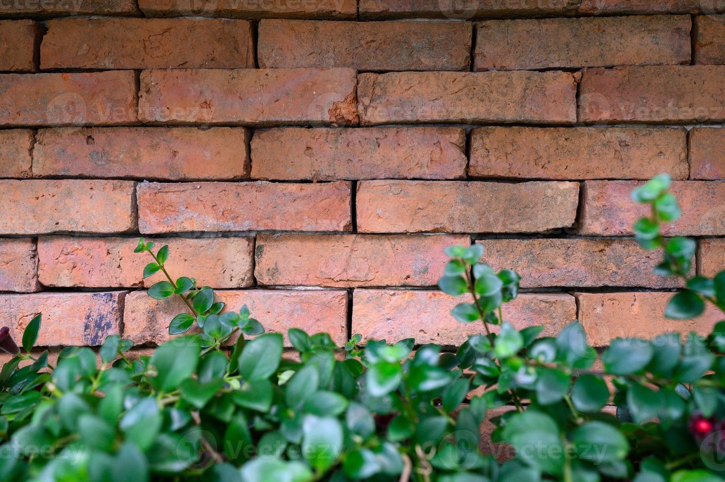 rote Backsteinmauer mit Pflanzen foto