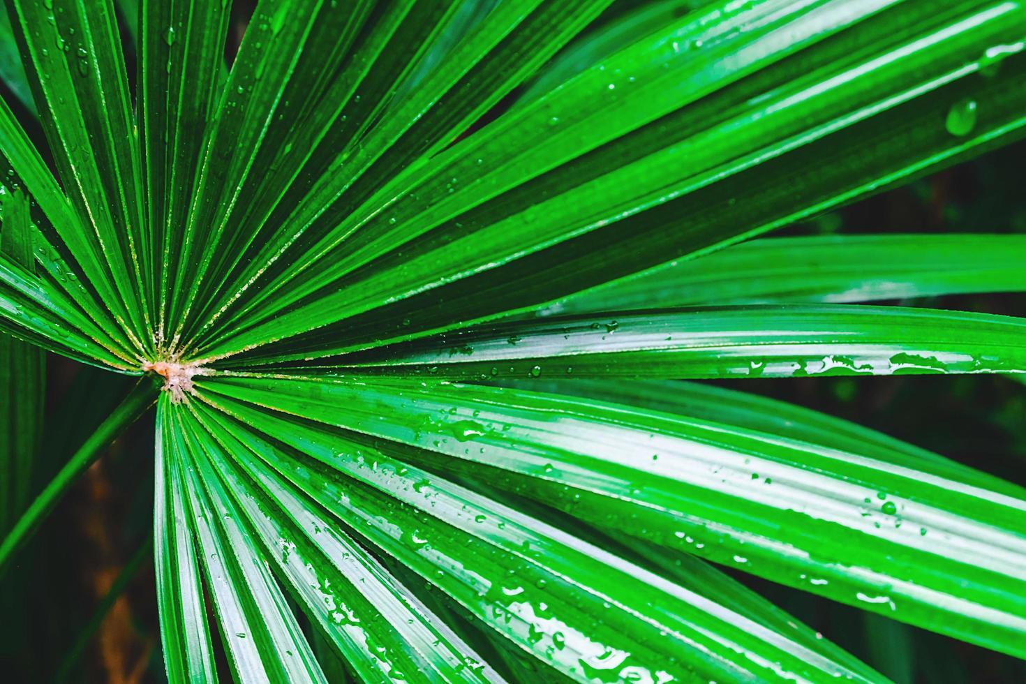 Nahaufnahme von grünen Palmblättern foto