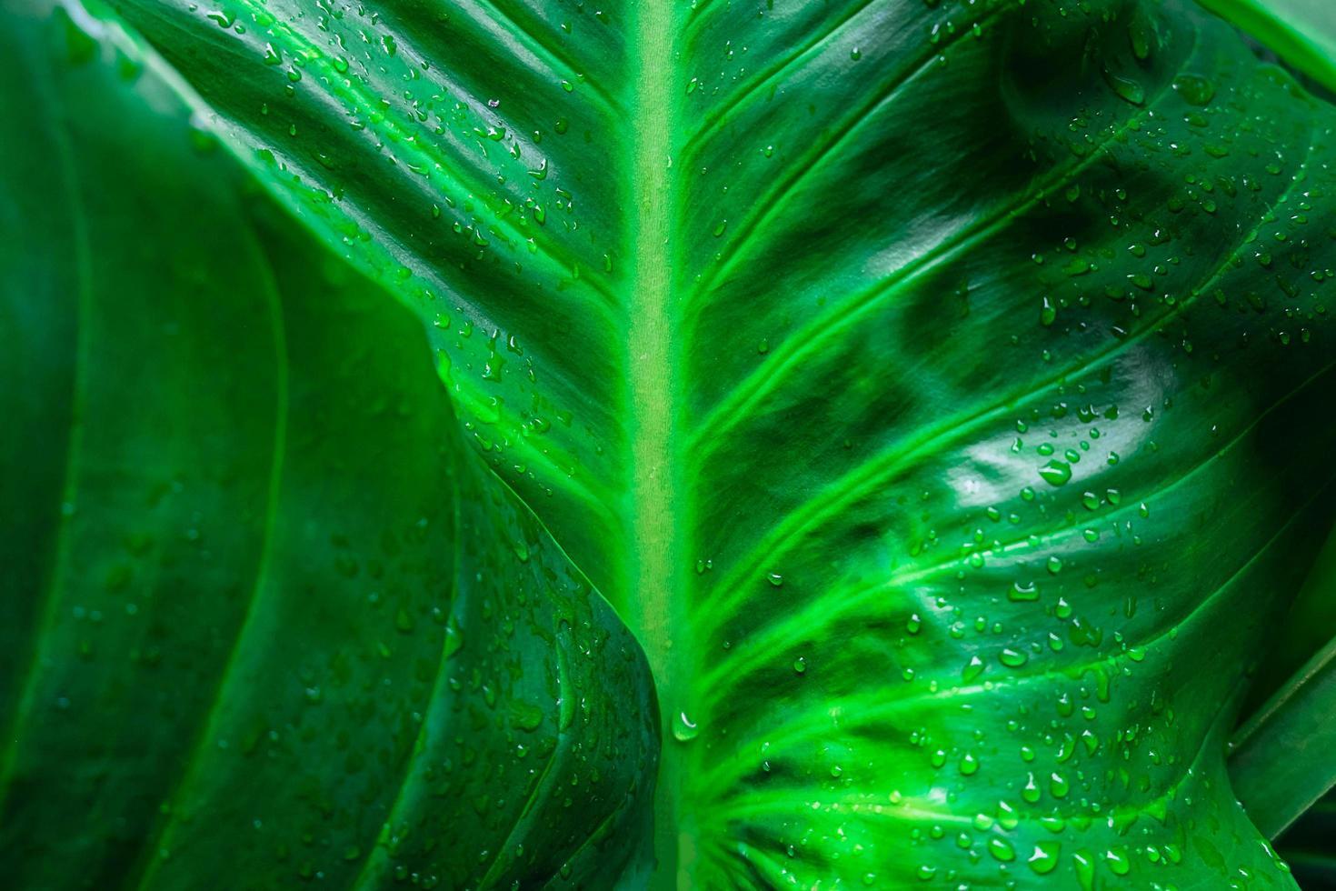Detail der grünen Blätter foto
