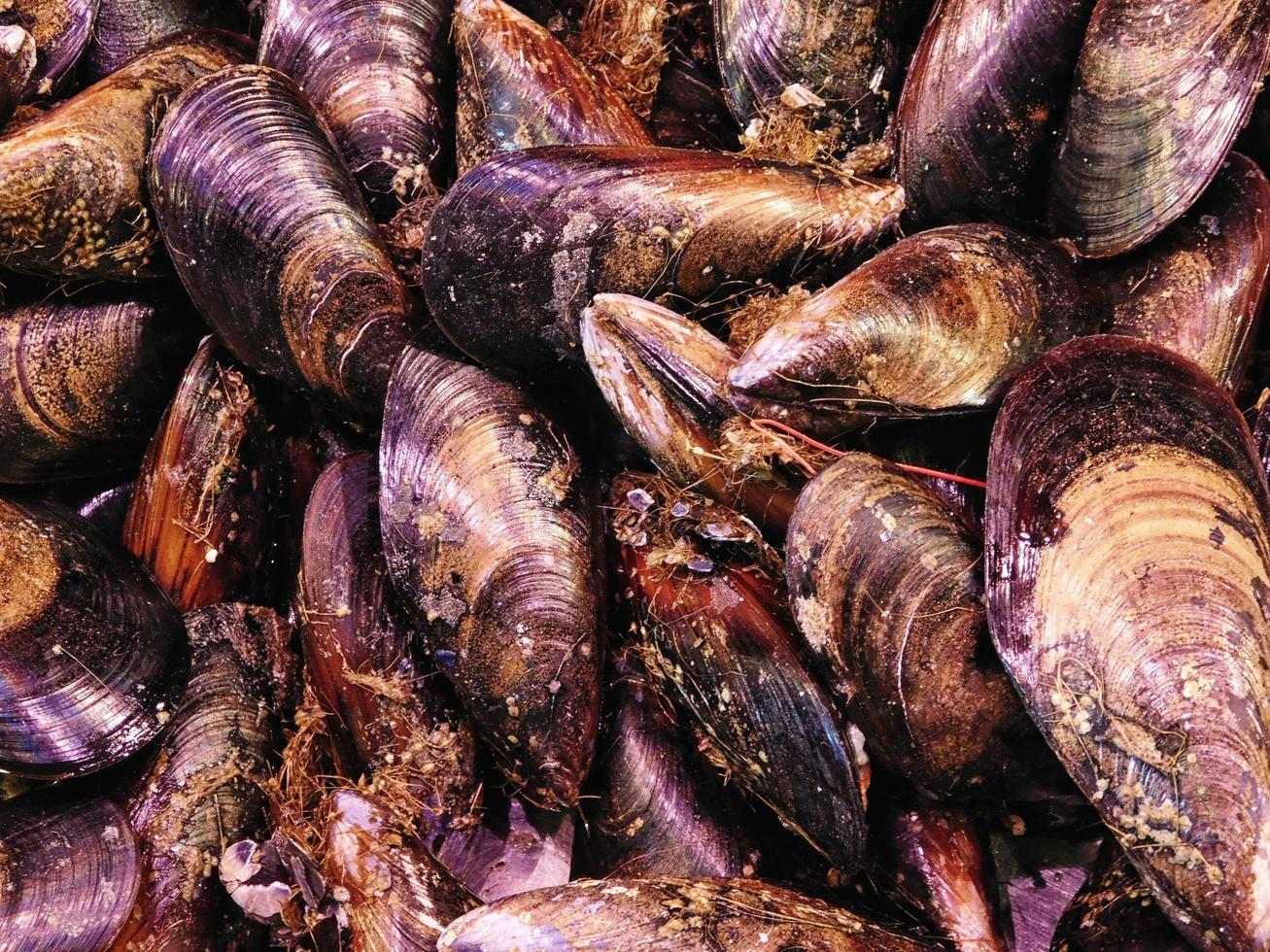 Haufen Muscheln oder Muscheln foto
