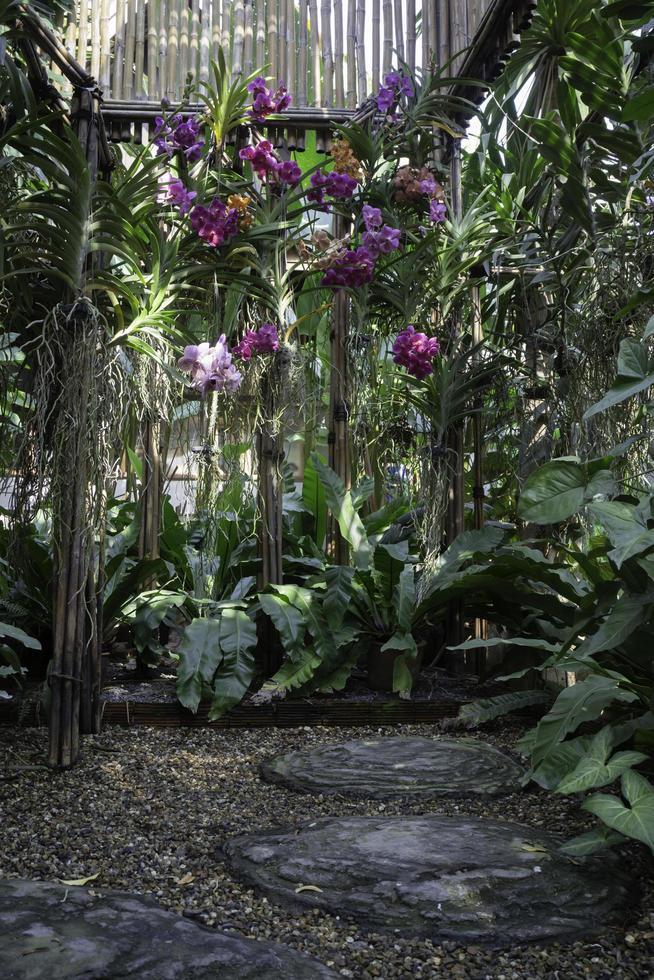 Orchideen im Garten foto