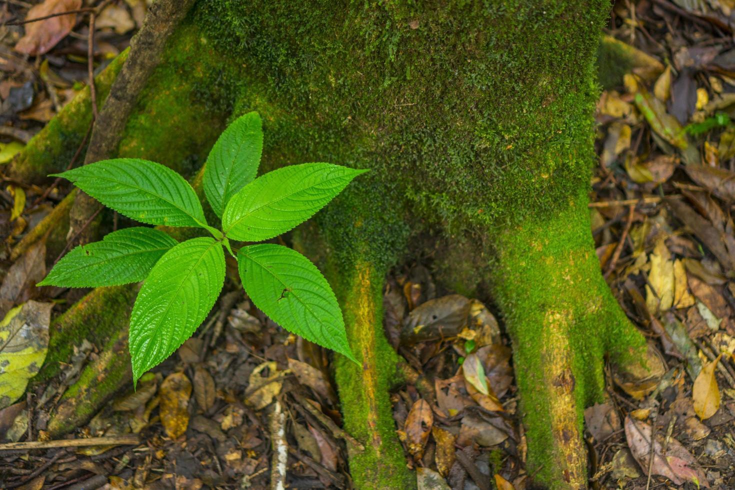 grüne Pflanze in einem Wald foto