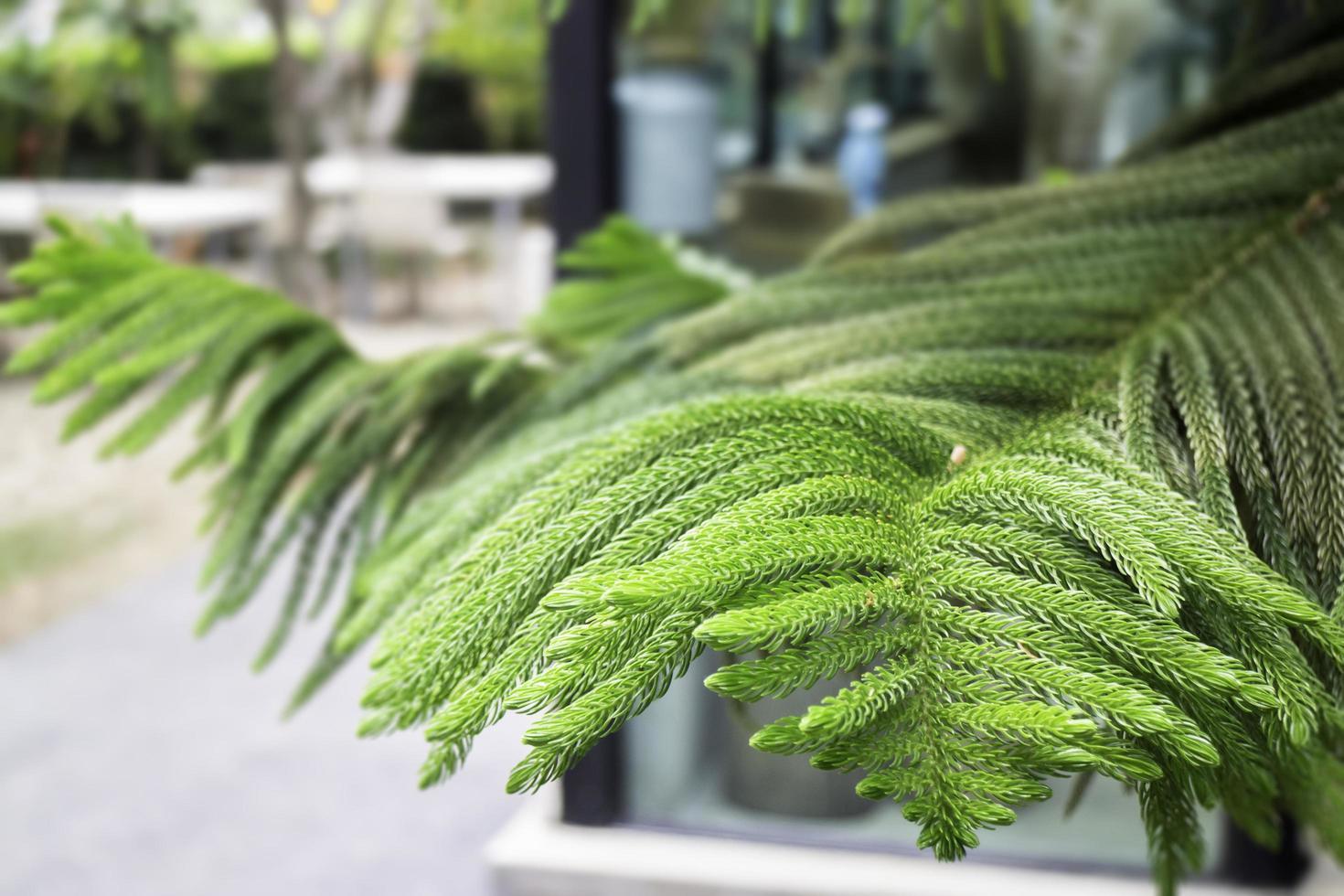 Nahaufnahme des grünen Baumes foto