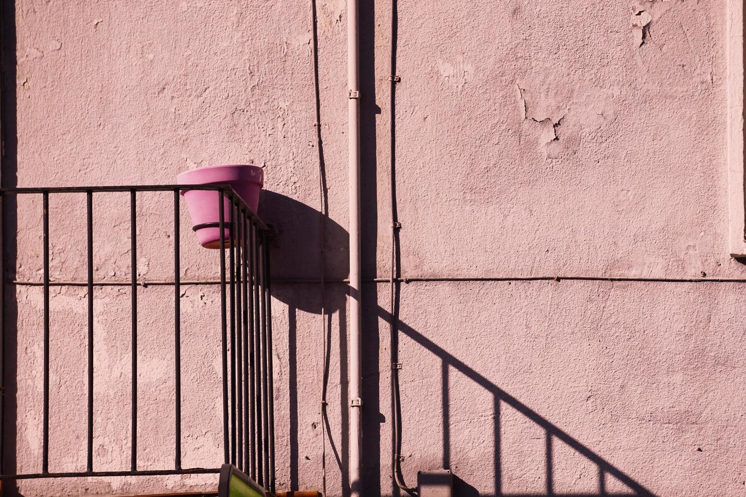 rosa Blumentopf auf einer rosa Wand foto