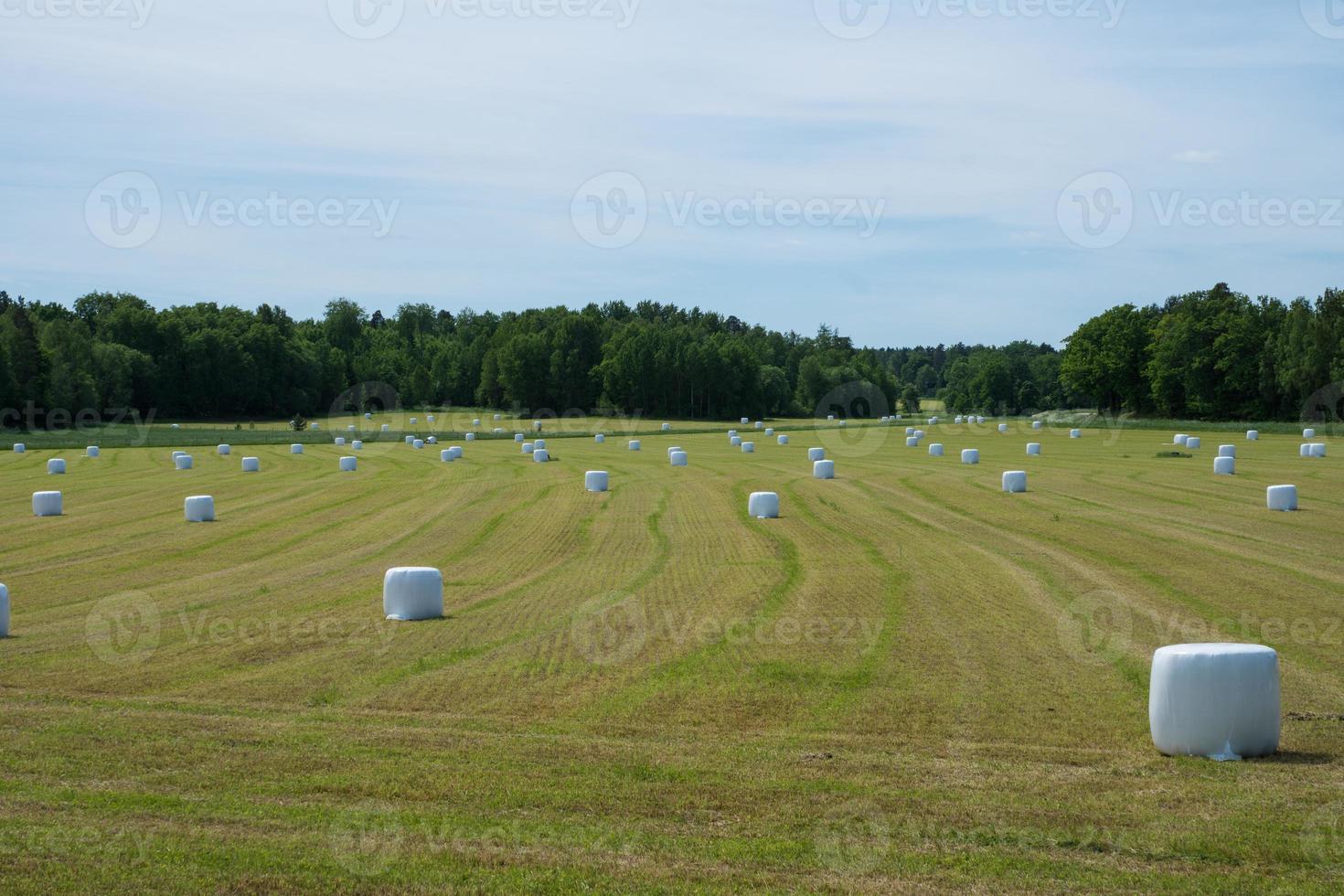 geerntetes Feld gefüllt mit weißen Heuspulen foto
