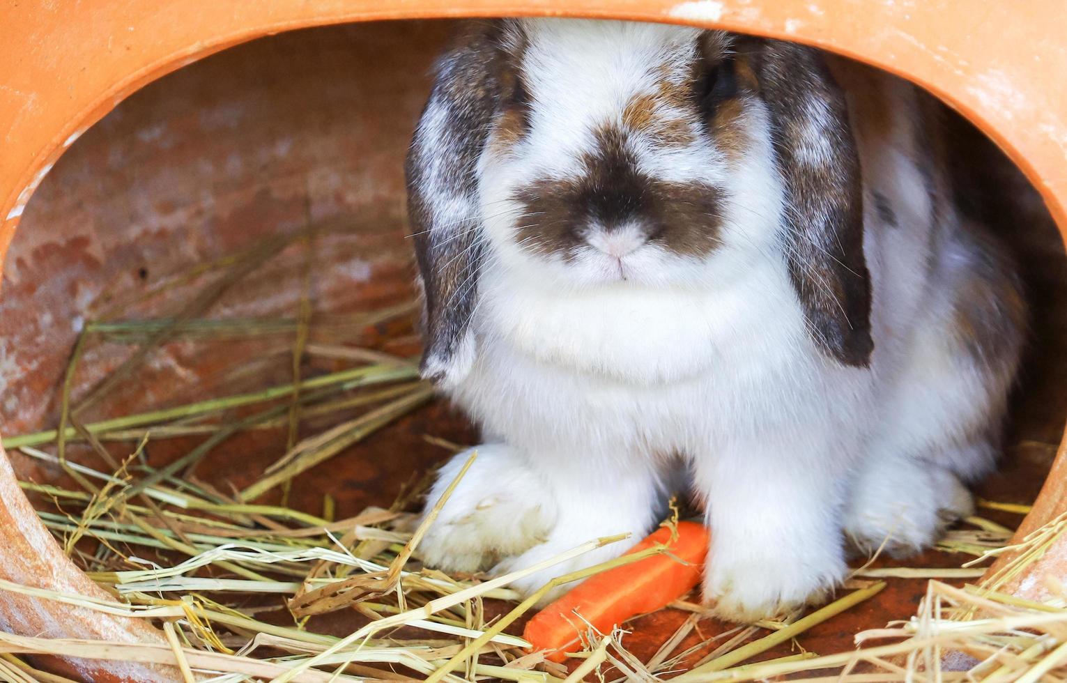 süßes weißes Kaninchen auf dem Gras oder Stroh foto