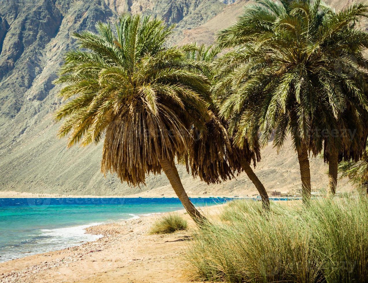 tropischer Strand am Roten Meer foto
