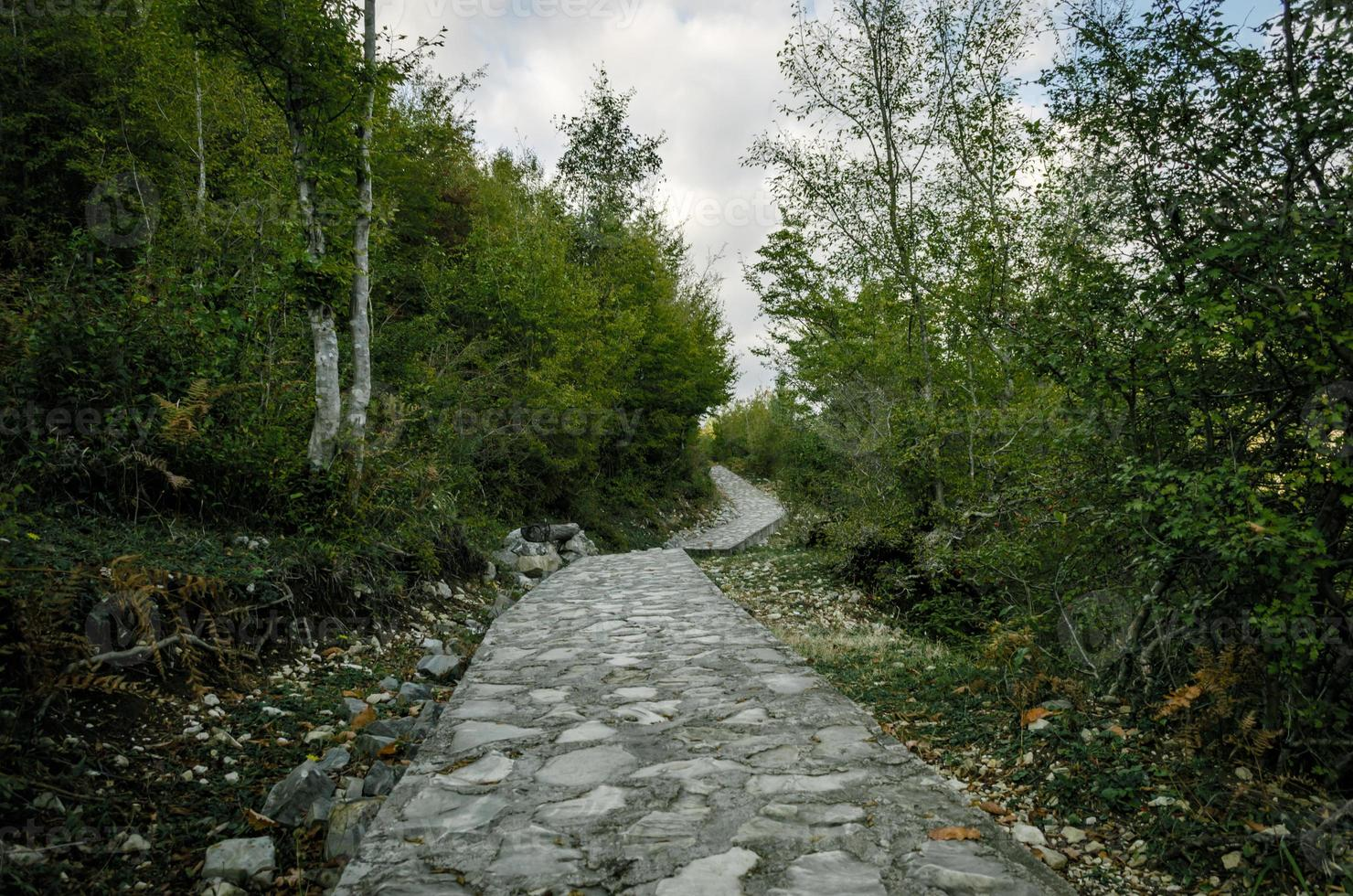 Stein Fußweg mit grünen Bäumen foto