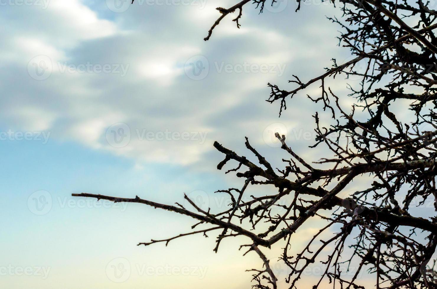 Zweige gegen einen blauen Himmel mit Wolken foto