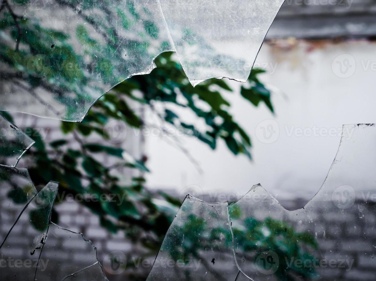 Blick auf einen Ast durch Glasscherben foto