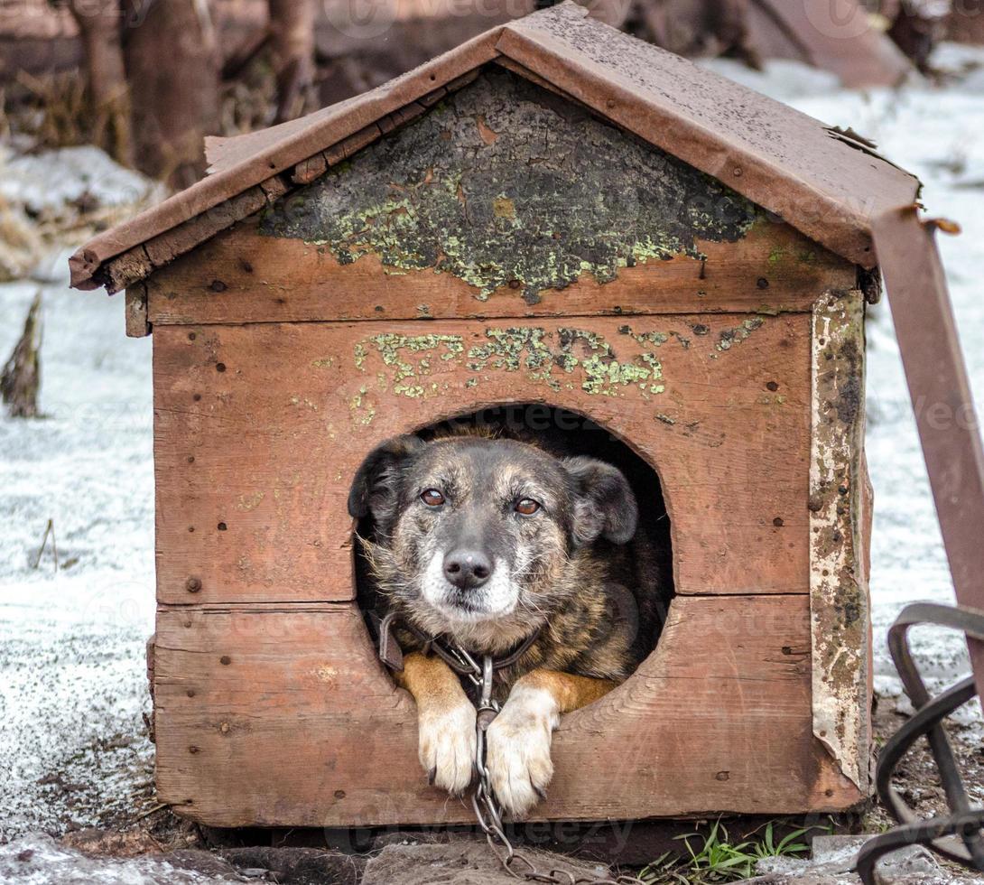Hund in einer Hundehütte foto