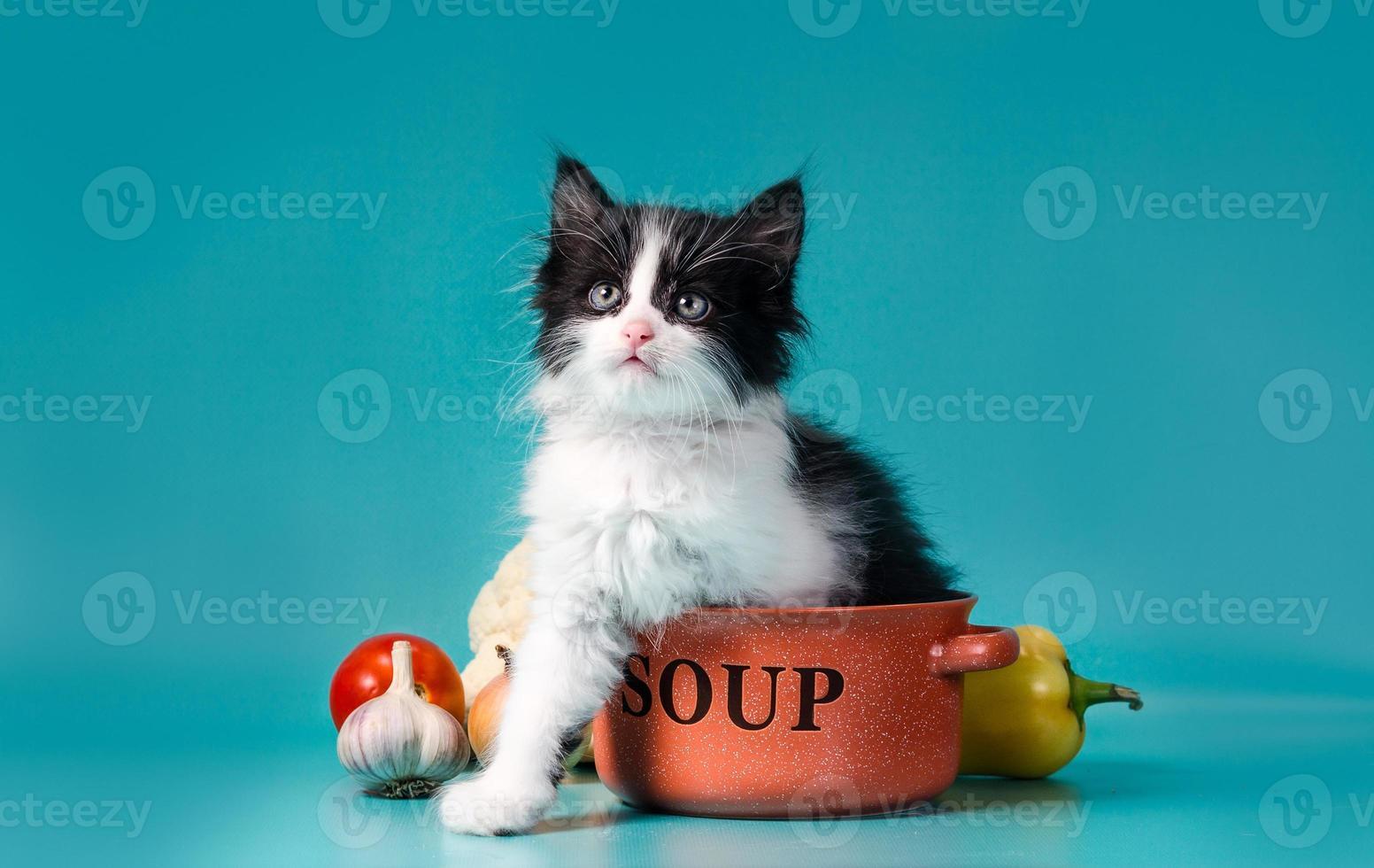 Katze mit einer Schüssel Suppe foto
