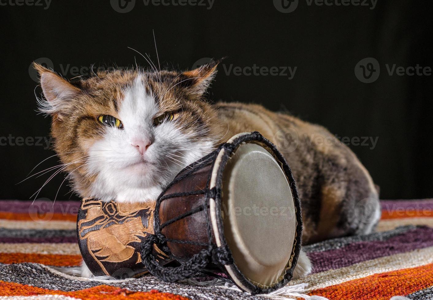 mürrische Katze mit einer Trommel foto