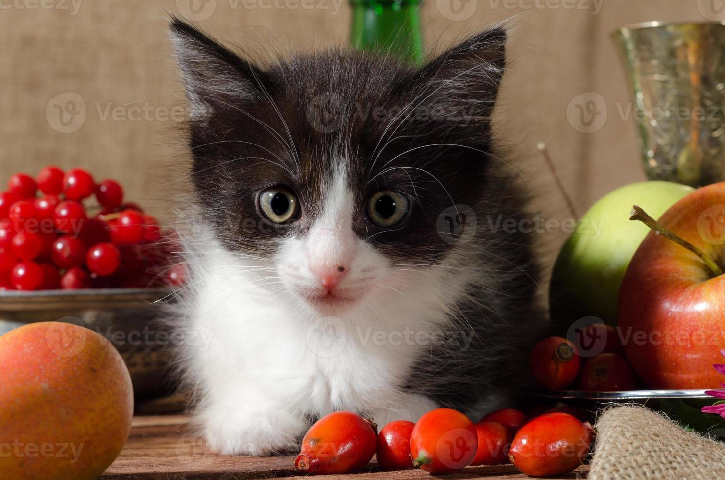 Schwarzweiss-Kätzchen unter den Früchten foto