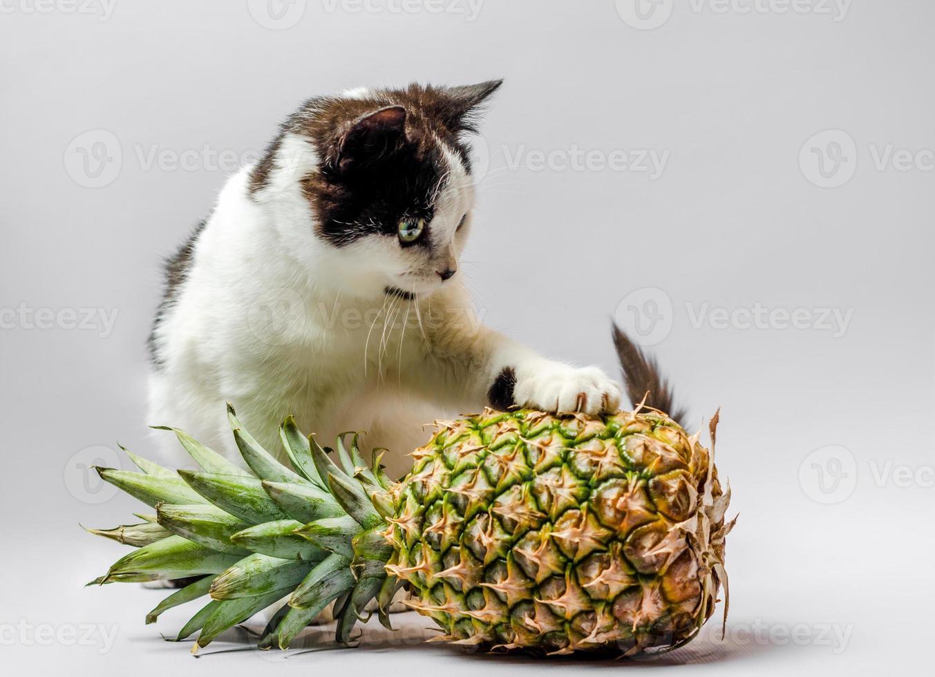 Schwarzweiss-Katze mit einer Ananas foto