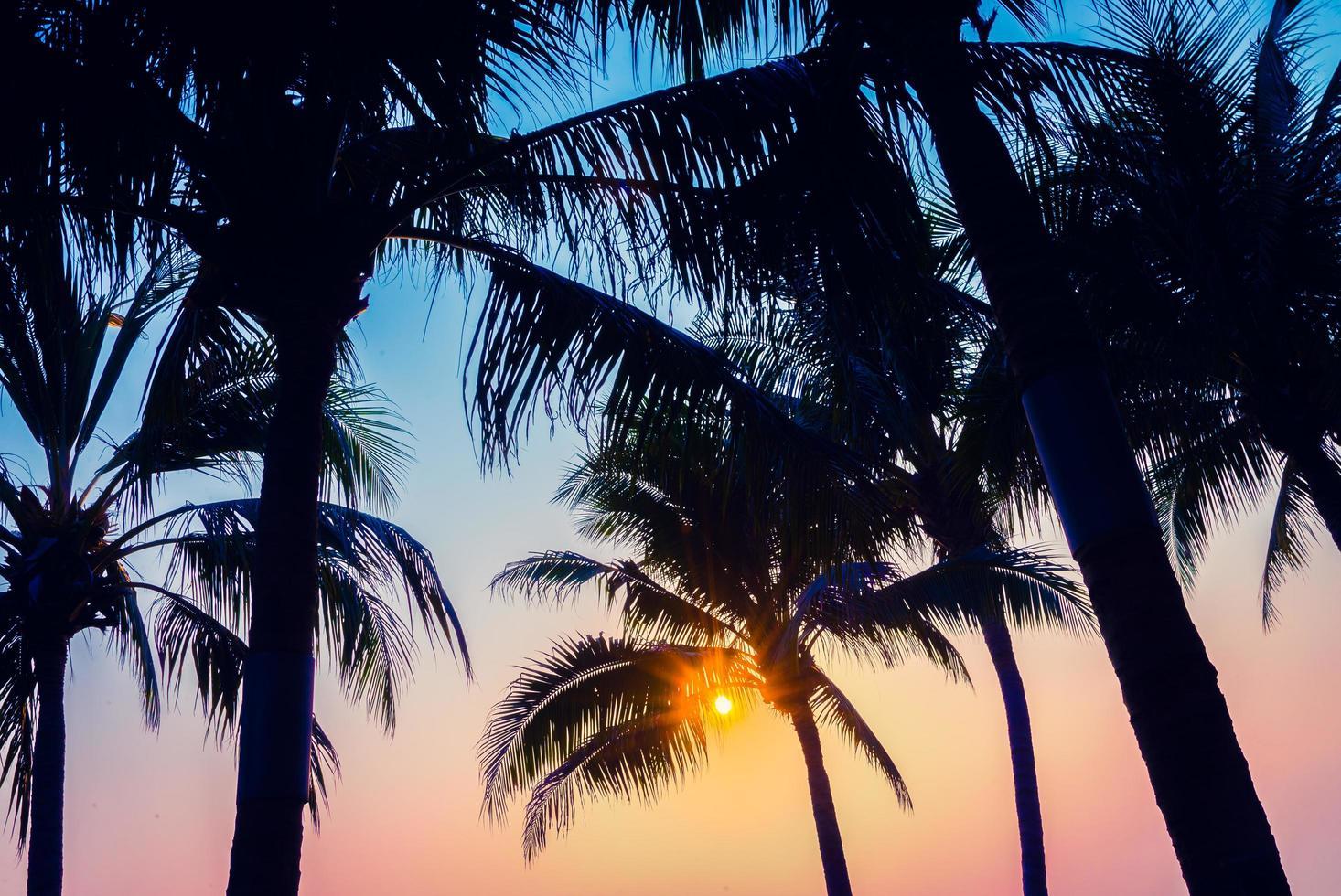 Silhouette von Palmen foto