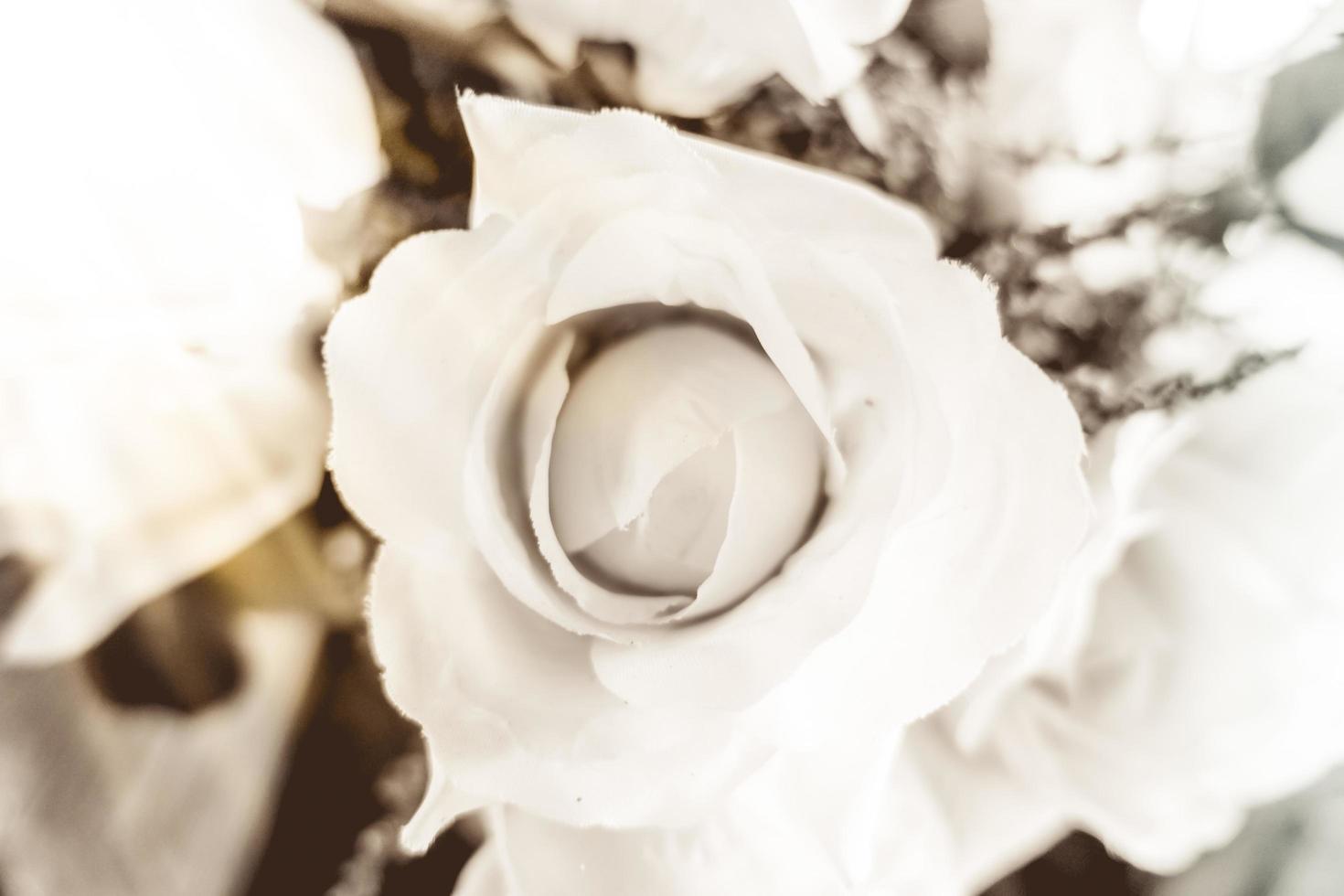 weicher Fokus auf Rose foto
