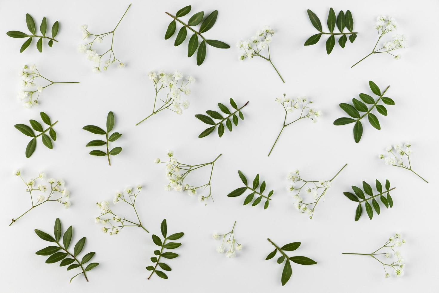 flach legen Blumen auf weißem Hintergrund foto