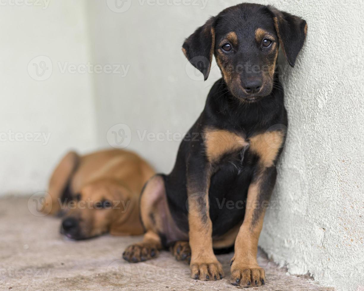süße Rettungshunde im Tierheim warten darauf, adoptiert zu werden foto