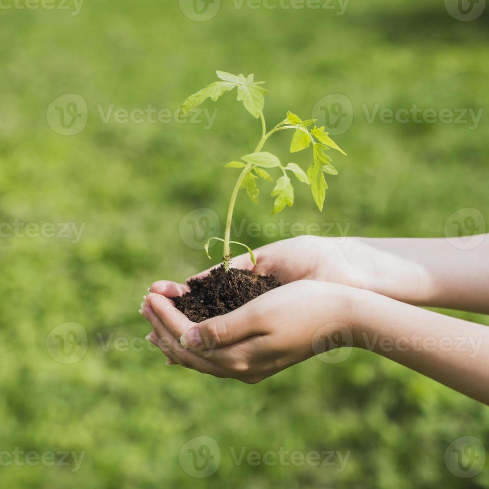 freiwilliges Umweltkonzept der Hände, die eine Pflanze im Boden halten foto