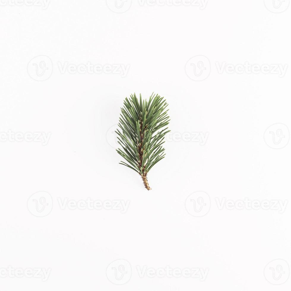 grüner Nadelzweig auf weißem Hintergrund foto