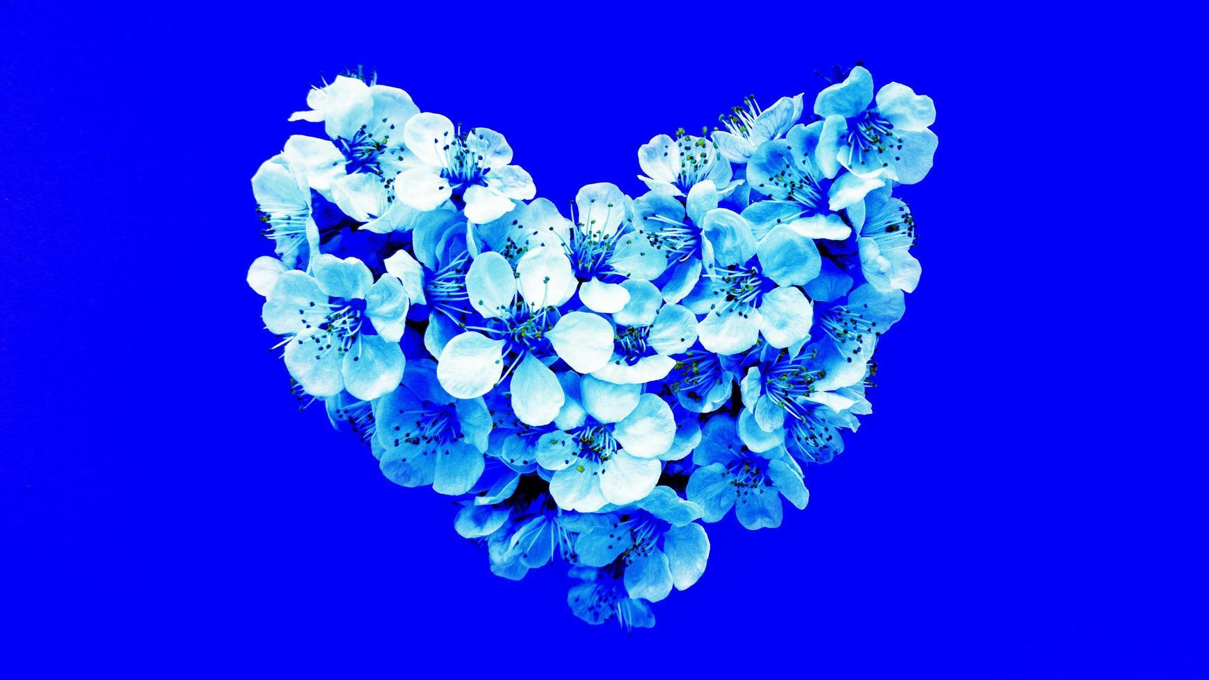 herzförmige Blumen auf blauem Hintergrund. Stockfotografie. foto