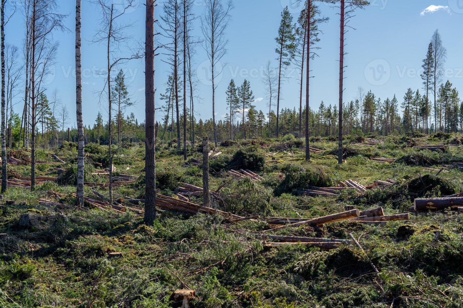 neu gemachtes Entwaldungsgebiet in Schweden foto