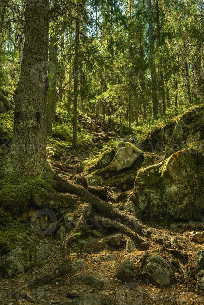 steiler Weg einen Berg hinauf in Schweden foto