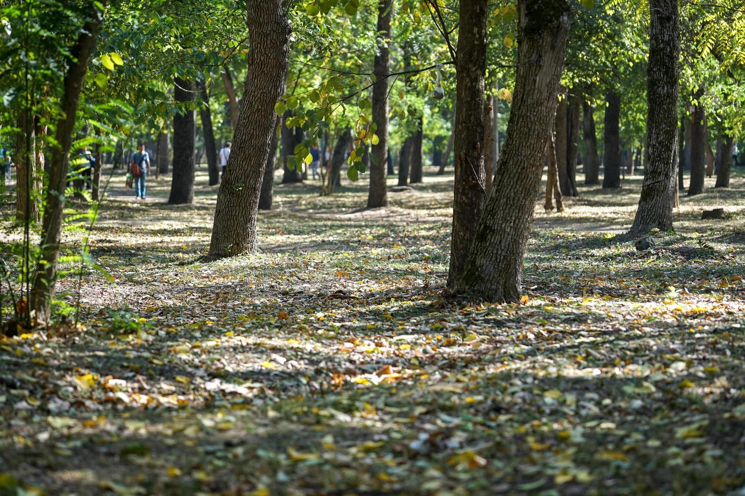 Bäume im Herbstpark mit Leuten, die auf unscharfem Hintergrund gehen foto