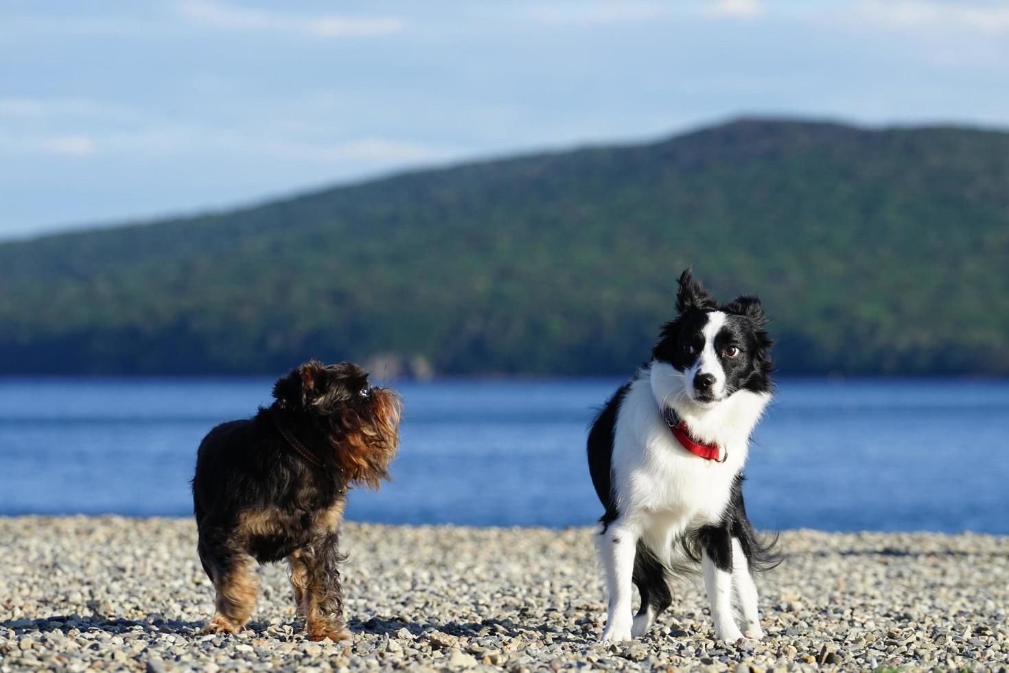 Seelandschaft und Hunde am Strand foto