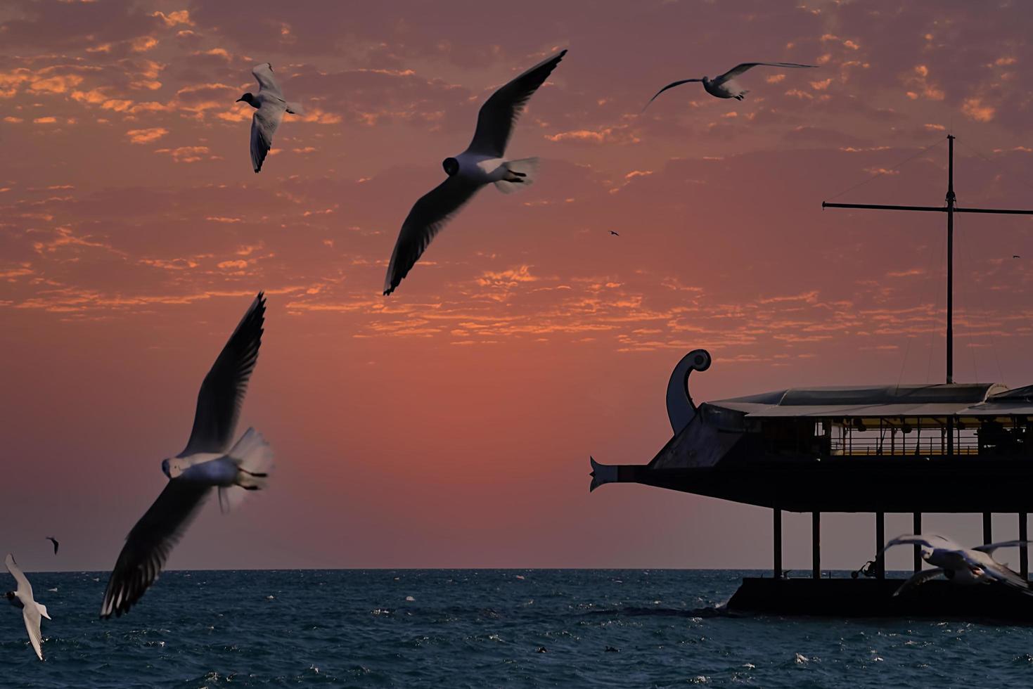 Sonnenuntergang über dem Meer und Möwen auf der Krim von Jalta foto