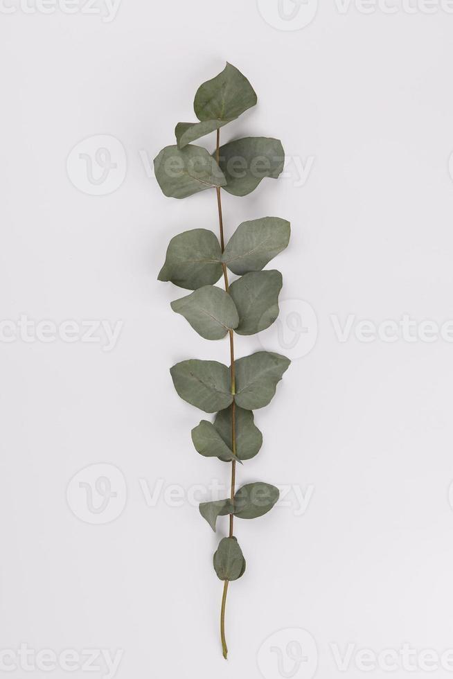 hübscher Zweig auf weißem Hintergrund foto