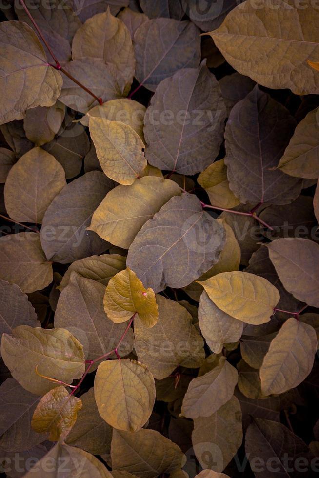 grüne und gelbe Pflanzenblätter in der Natur foto