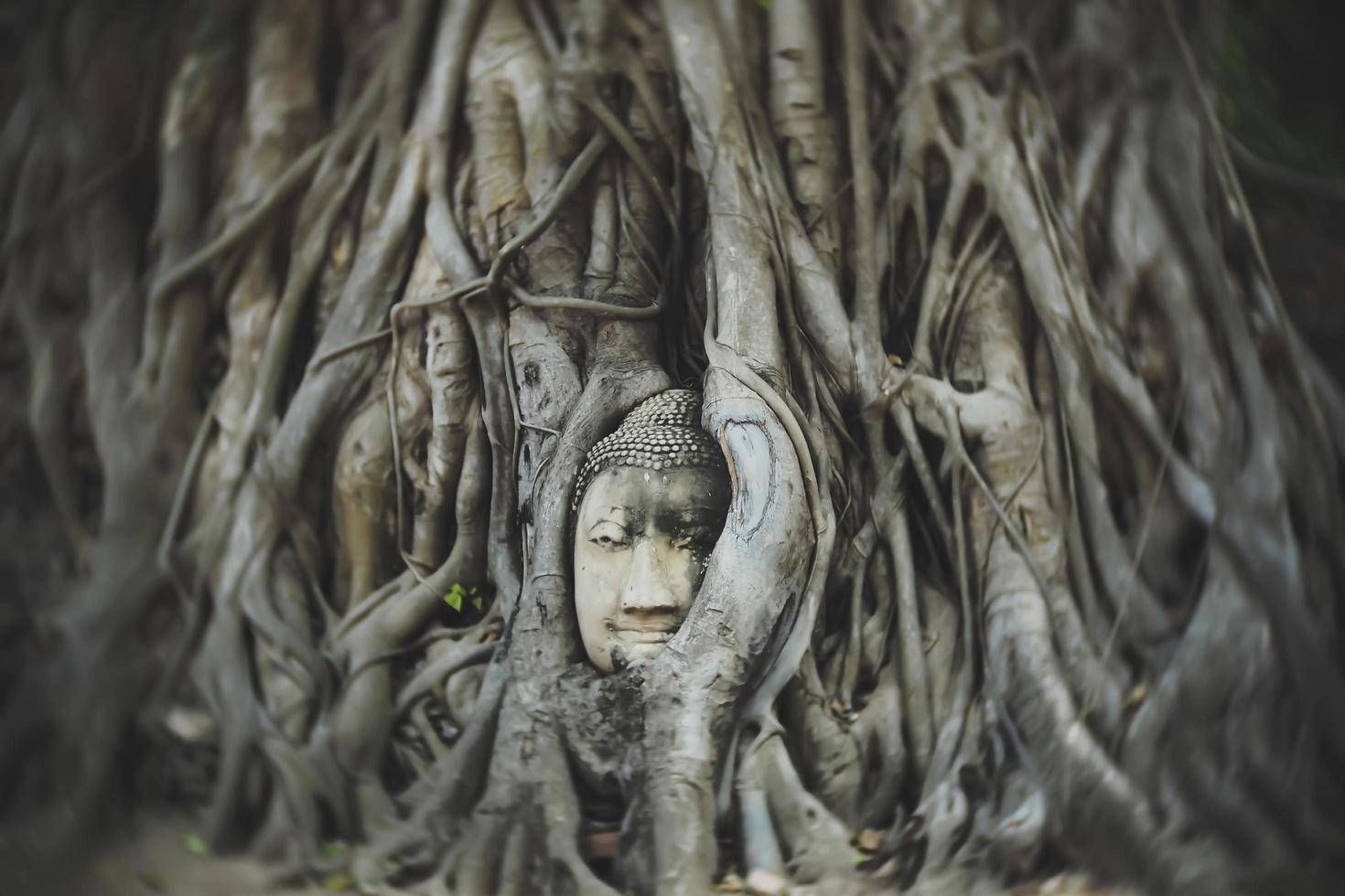 alter Kopf des Buddha-Kopfes foto