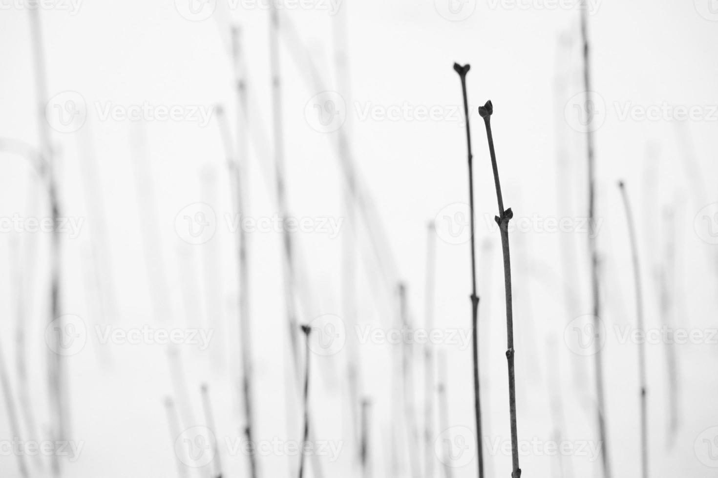 schöne Musterstammlinie des Pflanzenbuschs in einem kalten Winterschneefeld foto