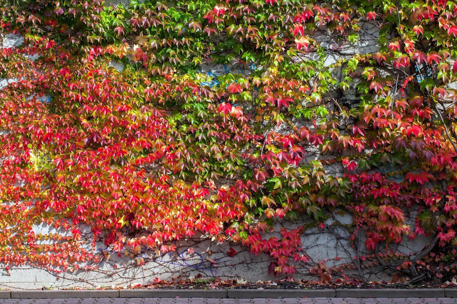 abstrakter Hintergrund natürliche Blätter an der Wand foto