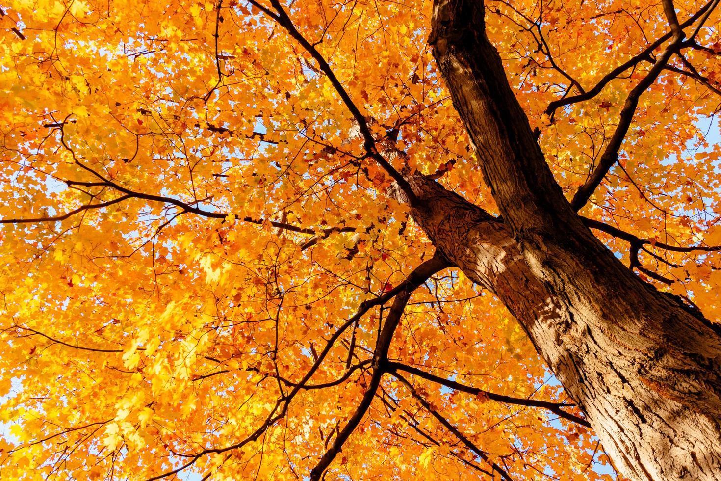 gelbe Blätter und Zweige im Herbst foto