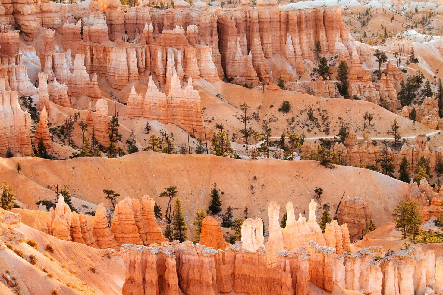 Säulen im Nationalpark Bryce Canyon foto