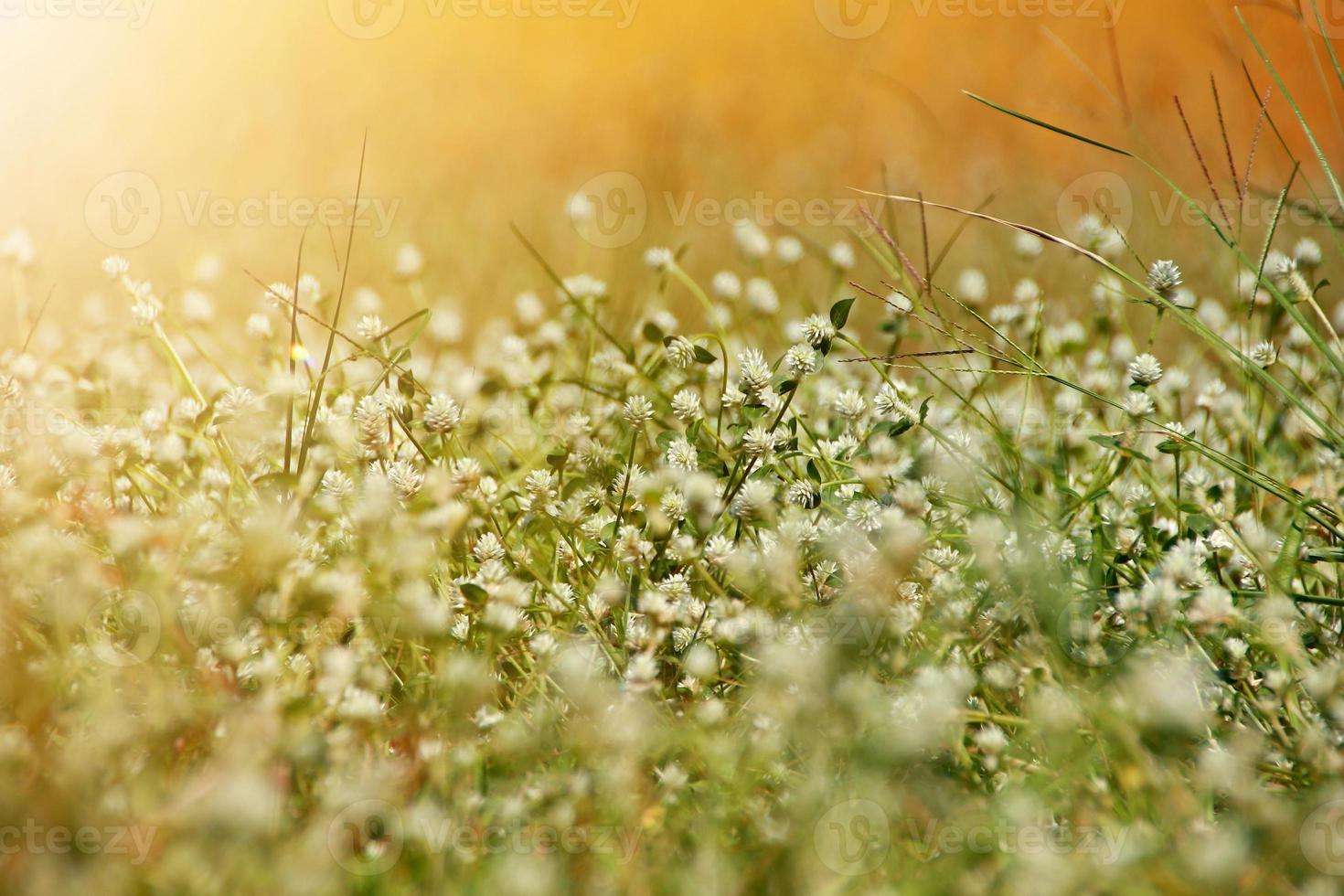 schöner Naturhintergrund mit frischem Gras des Morgens und Marienkäfer. foto